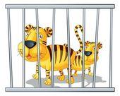 Tigers — Stock Vector