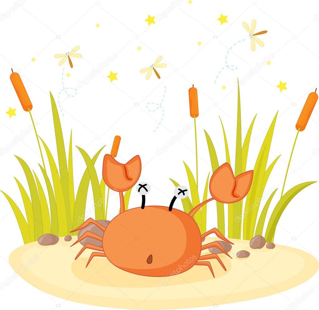 坐在岩石上的螃蟹的插图 — 矢量图片作者 interactimages