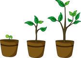 Pot plants — Wektor stockowy