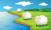 Sheep — Stock Vector