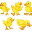 Duckling chicks — Stock Vector #10443771
