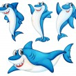 Shark series - 