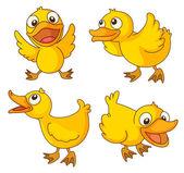 Chicks — Stock Vector