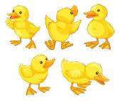 Duckling chicks — Stock Vector
