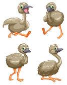 Emu ostrich series — Stock Vector