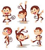 Serie scimmia — Vettoriale Stock