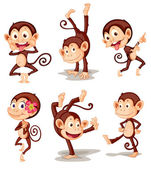Série monkey — Stock vektor