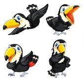 Toucan bird series — Stock Vector