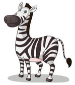 Zebra illustration — Stock Vector