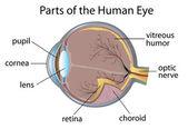 Human eye — Stock Vector