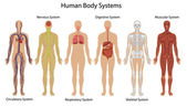Human body systems — Vettoriale Stock