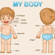 My body — Stockvector #10520591