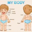 My body — Stock Vector #10520591