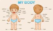 Moje tělo — Stock vektor