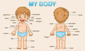 My body — Vector de stock