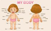 Il mio corpo — Vettoriale Stock