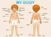 Mijn lichaam — Stockvector