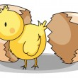 Chick hatching - Stock Vector