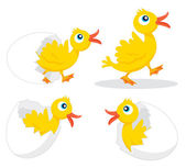Four chicks — Stock Vector