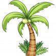 Royalty-Free Stock Vector Image: Coconut palm