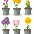 Plants - Stock Vector