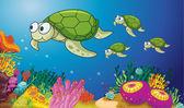 Turtles — Stock Vector