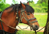 Horse geared up — Stock Photo