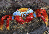 Crab on a Rock — Stock Photo