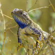 Stock Photo: Lizard
