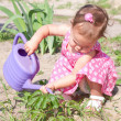 Stock Photo: Little baby watering flowers