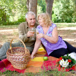 Couple picnicking in the forest — Stock Photo #10076101