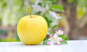 Apple and Flower Blossom — Stock Photo
