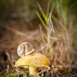 Mushroom and snail — Stock Photo