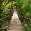Bridge to the jungle,Khao Yai national park,Thailand — Stock Photo #9883569