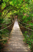 Brug naar de jungle, khao yai nationaalpark, thailand — Stockfoto
