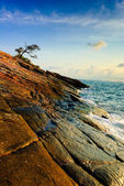 Lonely tree in cape at sunrise, of koh samet island, Thailand — Stock Photo