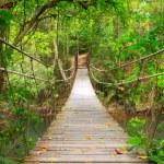 Bridge to the jungle,Khao Yai national park,Thailand — Stock Photo