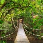 Bridge to the jungle,Khao Yai national park,Thailand — Stock Photo #9932001