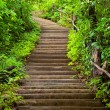 Stairway to forest — Stock Photo #9938676