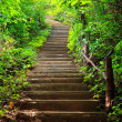 Stairway to forest — Stock Photo