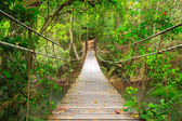 Bridge to the jungle,Khao Yai national park,Thailand — Stock Photo