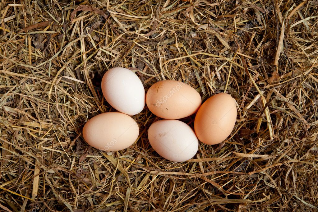 Five egg in hay  Stock Photo #9938498