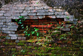 Old & ancient brickwall texture with moss — Stock Photo