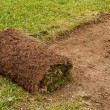 Roll of Cut Turf on Lawn — Stock Photo