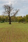 在农业领域的新增长 — 图库照片