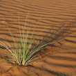 Stock Photo: Plant in sand dunes in desert
