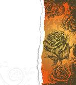 Cartón rasgado con rosas — Vector de stock