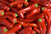 Frame of red peppers — Stock Photo
