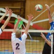 Kaposvar - Kazincbarcika volleyball game — ストック写真