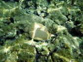 紅海でサンゴ — ストック写真